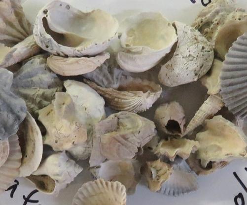 FossilSeashells18-03-23_8229